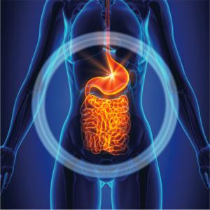 Vitamin D3 Boosts Gut Health