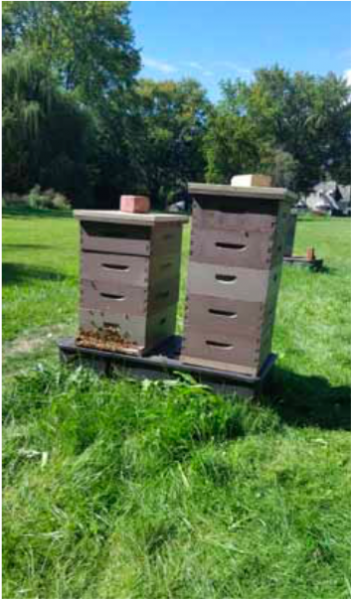 Betty Bee Apiary Provides a Glimpse Into the Hive