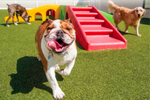 Boarding Solutions for Beloved Pets
